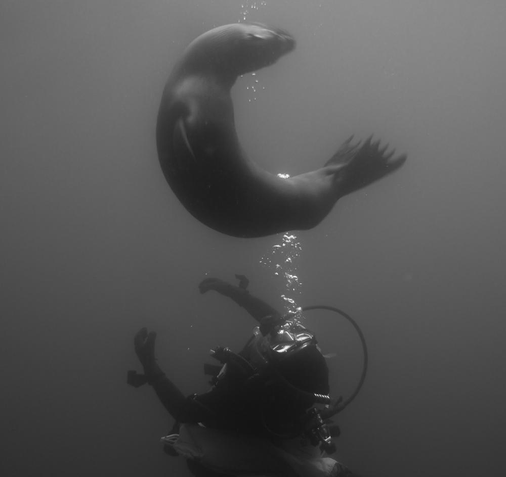 Diver Name
