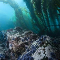 Santa Barbara Island