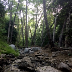 Hike 6/22/18 Aromatic Plants @ Monrovia Falls