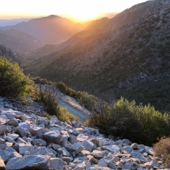 Hike 7/22/18 Golden Hour Plant Tasting @ Mt. Lowe