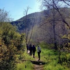 Hike 2/24/19 Edible Wild Spring Greens @ Arroyo Seco