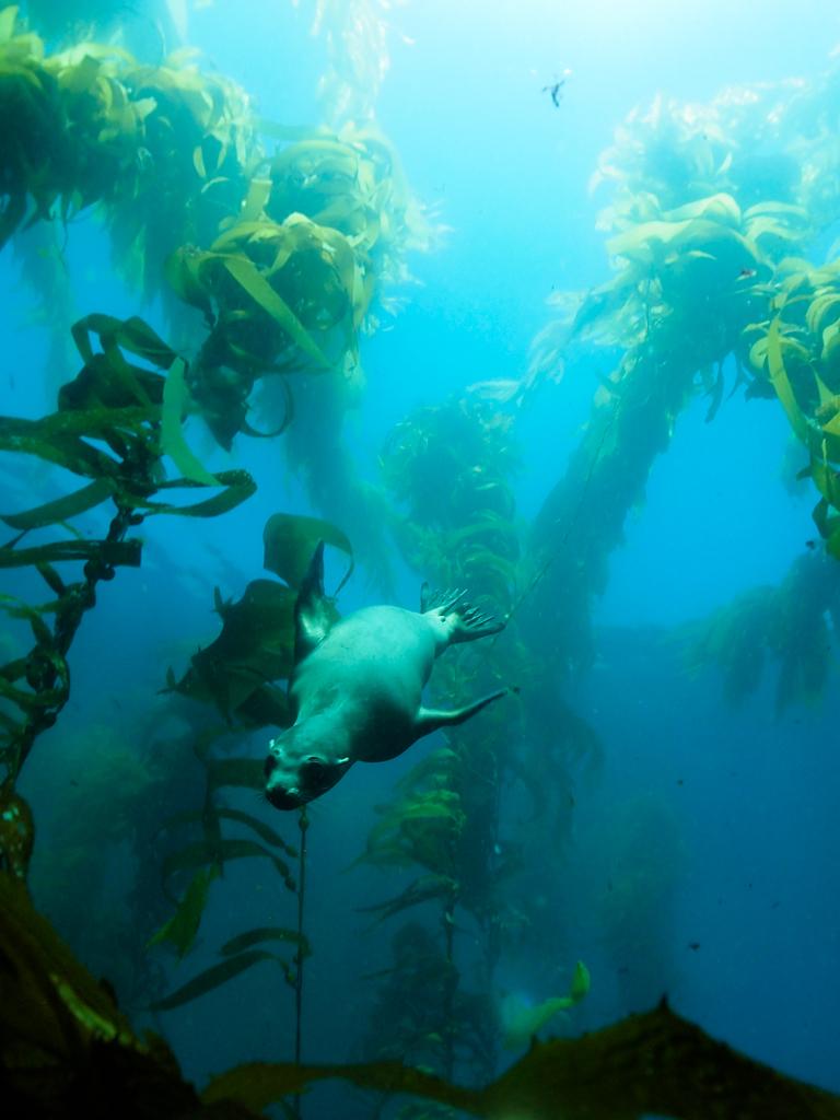 Ocean Safari Scuba | Community | Trip 5/11/19 Santa Barbara Is
