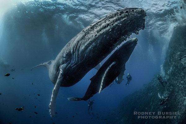 Socorro Island & Cabo Pulmo Diving and Eco Expedition 2018